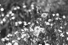 flower453-3
