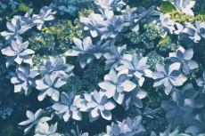 flower459-2