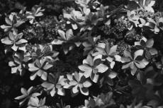 flower459-3