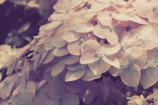 flower463-2