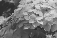 flower463-3