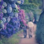 【高解像度】紫陽花の小径を去りゆく人影(3パターン)