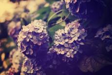 flower466-2