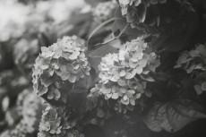 flower466-3