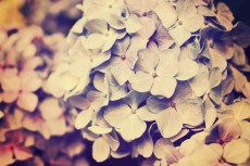 flower467-2