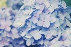 flower467
