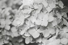 flower467-3