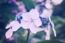 flower468-2
