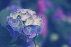 flower469-2