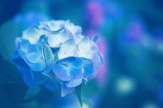 flower469