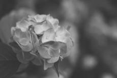 flower469-3