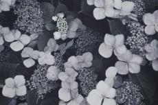 flower470-3