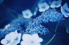 flower471