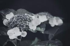 flower472-3