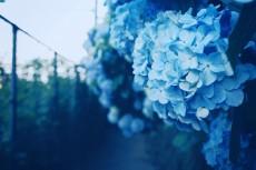 flower473-2