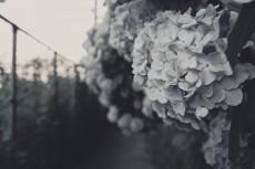 flower473-3