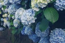 flower474