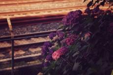 flower475-2