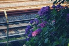 flower475