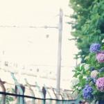 【高解像度】滲んだ景色と紫陽花(アジサイ)(3パターン)
