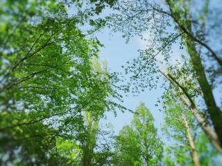 【高解像度】新緑と晴れた空