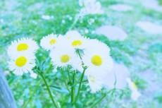 flower481