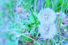 flower483