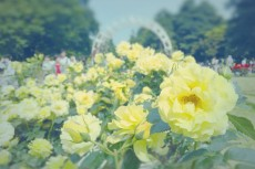flower491