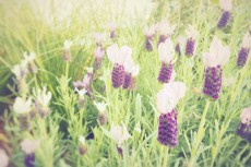 flower493