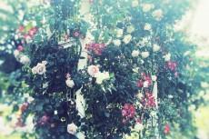 flower495