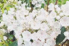 flower498