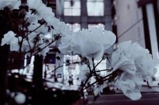 flower509