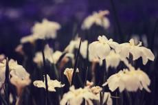 flower514-2