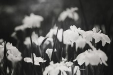 flower514-3