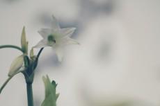 flower515