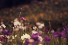 flower516-2
