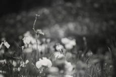 flower516-3