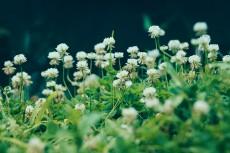 flower517