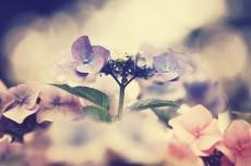 flower518-2