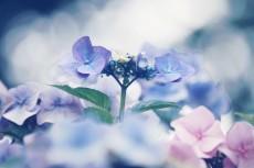 flower518