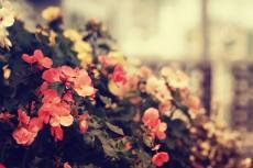 flower519-2