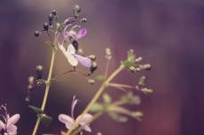 flower520-2