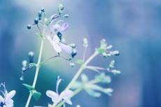 flower520