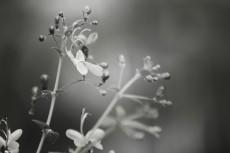 flower520-3