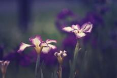 flower521-2