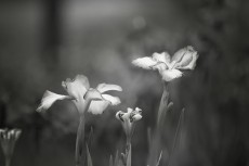 flower521-3