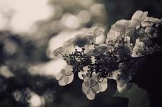 flower522-2