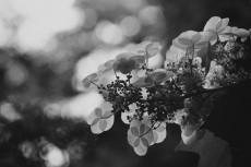 flower522-3