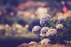 flower524-2