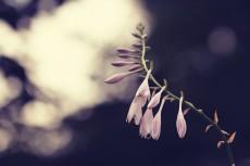 flower526-2
